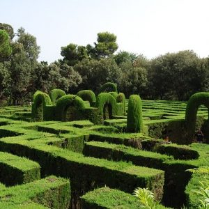 Quelle haie convient à votre jardin?